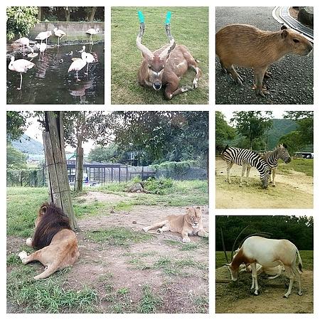 姫路セントラルパークの動物達