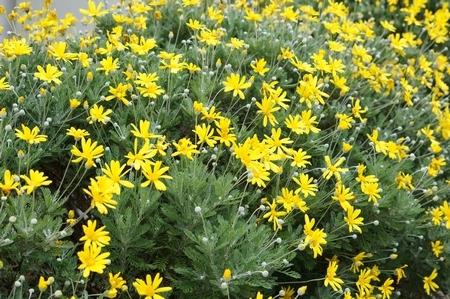 散策中に見かけた花