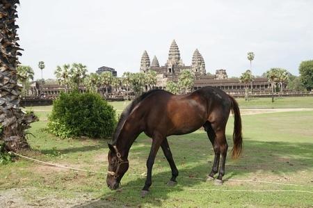 アンコールワットの乗馬の馬