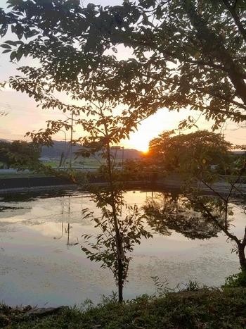 亀岡にある出雲大神宮の池