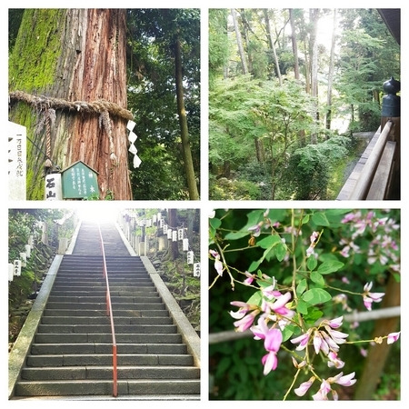 石山寺の大木や花々