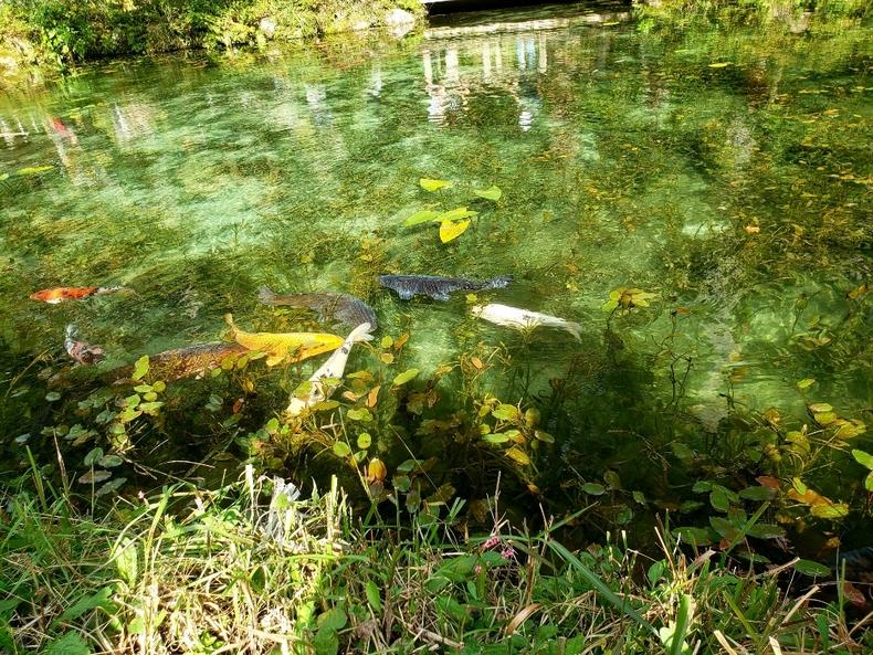 透き通ったモネの池