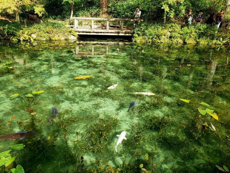 モネの池にかかる橋